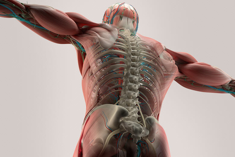 Bulletproof Back: Progress Patients from the Treatment Table to Functional Movement